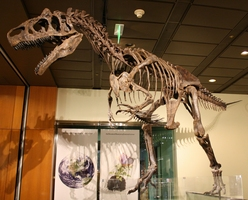 About Allosaurus