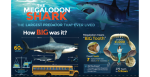New - Killer Megalodon Infographic Posters