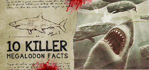 10 Killer Megalodon Shark Facts