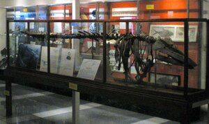 Vermont State Fossil - Mount Holly Mammoth & Charlotte Whale