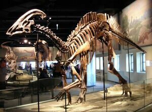Hadrosaur skeleton, Field Museum.  Photo by Lisa Andres