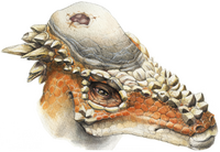 An artists reconstruction of Thescelosaurus.  By Nobu Tamura (http://spinops.blogspot.com)