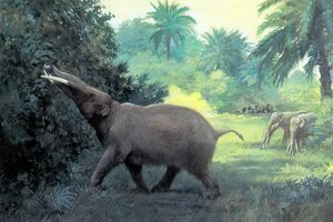 An artists reconstruction of Gomphotherium.