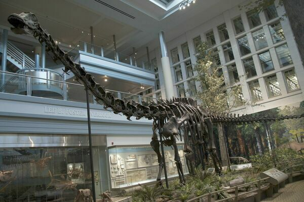 Diplodocus skeletal mount at the Carnegie Museum of Natural History.