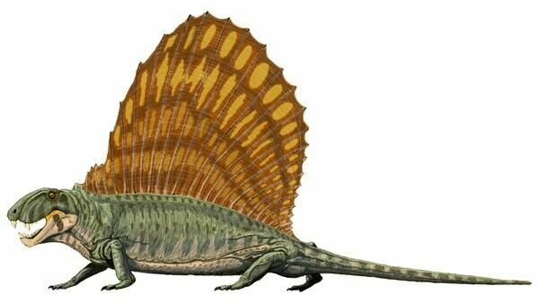 An artists reconstruction of Dimetrodon.  By Dmitry Bogdanov.