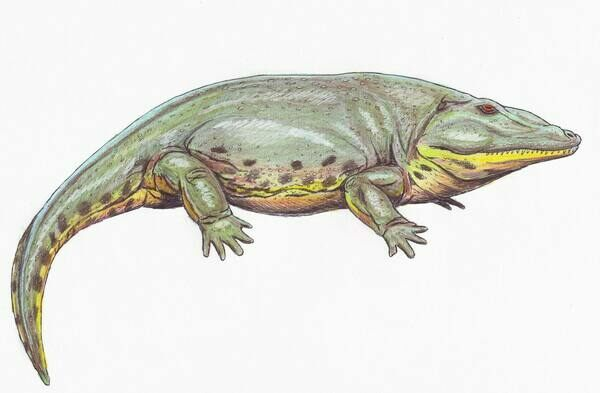 Artists reconstruction of the Eryops by Dmitry Bogdanov.  Creative Commons