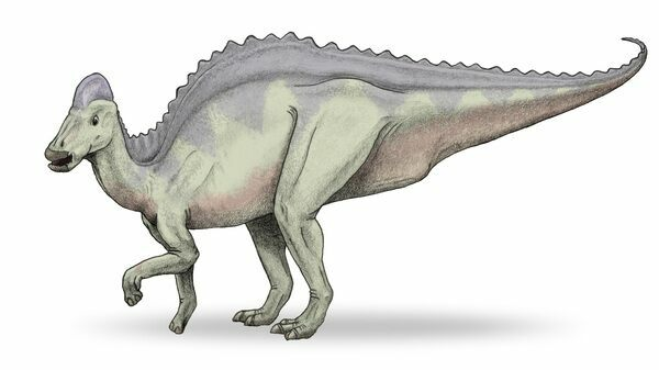 Hypacrosaurus drawing by wikipedia user debivort. Creative Commons License