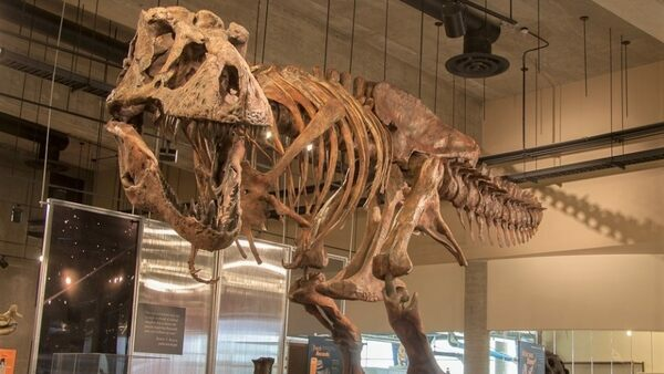 """Scotty"" is the largest T. rex skeleton ever found. (Image credit: Tourism Saskatchewan)"