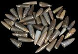 Bulk Polished Belemnites - 5 Pack - Photo 2