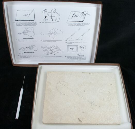 Prepare Your Own Fossil Fish Kit - Grade B - Photo 1