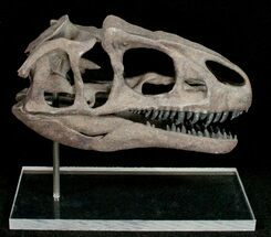Miniature 3D Printed Allosaurus Skull Replica