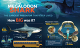 "24x36"" Megalodon Infographic Poster (Glossy) - Photo 2"