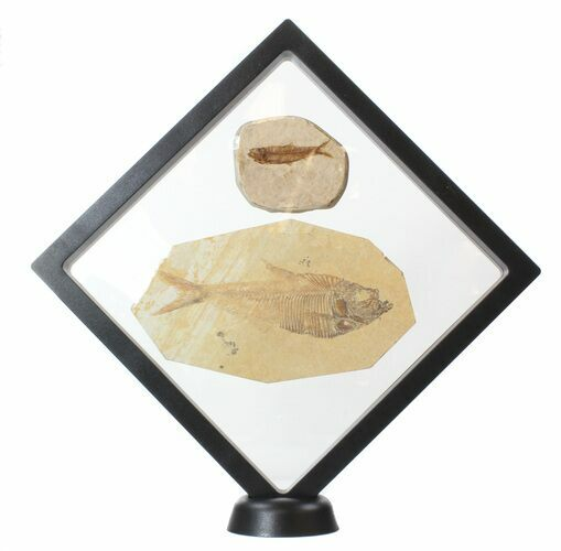 "XL Floating Frame Display Case - 7.1"" - Photo 1"