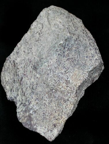 Rough Agatized Dinosaur Bone - 4.2 Ounces