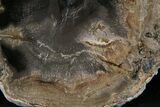 "5"" Petrified Wood Slab -  Sweethome, Oregon - #25879-1"