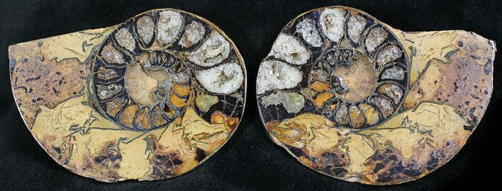 "2.1"" Iron Replaced Ammonite Fossil Pair"