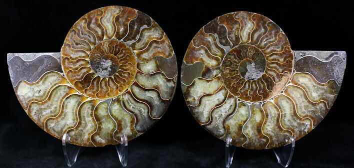"6.1"" Cut/Polished Ammonite Pair - Agatized"