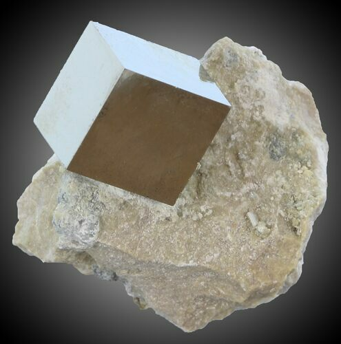 ".58"" Pyrite Cube on Matrix - Navajun, Spain"
