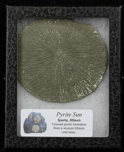"3.5"" Pyrite Sun In Riker Mount Case - Illinois"