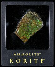 "2"" Brilliant Iridescent Ammolite With Display Case For Sale, #31691"