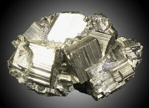 "Buy 3.45"" Pyritohedral Pyrite Cluster - Large Crystals - #31105"