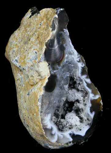 "1.8"" Cut & Polished Oco Ocho Geode - Brazil"