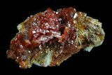 "1.75"" Shiny Red Vanadinite Crystals - Morocco - #32336-1"
