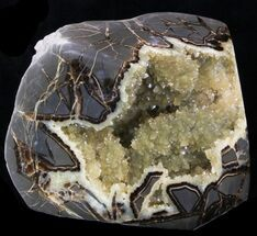 Spectacular Septarian For Sale