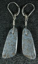 Powder Blue Agatized Dinosaur Bone Earrings For Sale, #33829