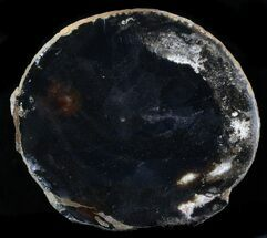 "Buy 5.6"" Polished Brazilian Agate Slice - #34405"