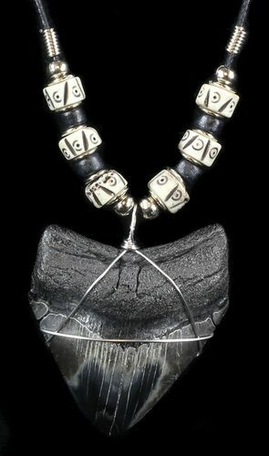 "2.2"" Polished Megalodon Tooth Necklace"