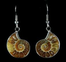 Buy Fossil Ammonite Earrings - 110 Million Years Old - #35836