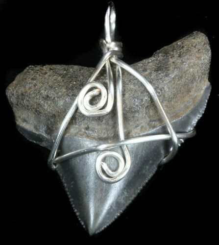 Serrated, Fossil Megalodon Tooth Pendant