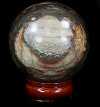 "Buy 3.55"" Colorful Petrified Wood Sphere - #36970"