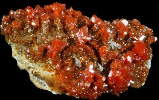 "Buy 2.5"" Red Vanadinite Crystal Cluster - Morocco - #36976"
