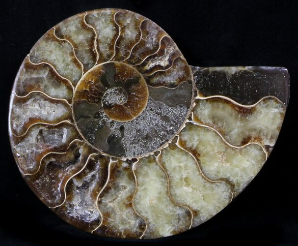 "4.3"" Agatized Ammonite Fossil (Half)"