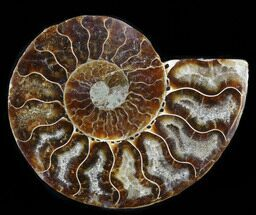 "Buy 3.15"" Agatized Ammonite Fossil (Half)  - #38767"