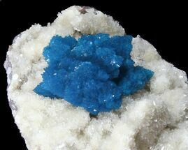 Large Cavansite Cluster on Stilbite - India For Sale, #39014
