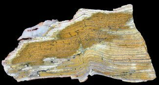Strelley Pool Stromatolite - Fossils For Sale - #39192