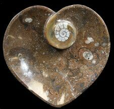 "6.5"" Heart Shaped Fossil Goniatite Dish For Sale, #39308"