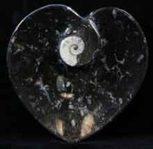"4.5"" Heart Shaped Fossil Goniatite Dish For Sale, #39314"