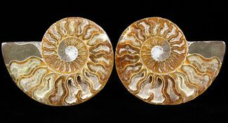 "Buy 3.6"" Sliced Fossil Ammonite Pair - Agatized - #39577"