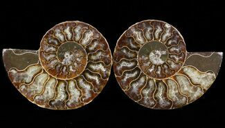 "Buy 3.25"" Sliced Fossil Ammonite Pair - Agatized - #39583"