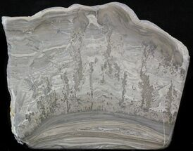 Stromatolite - Fossils For Sale - #41094