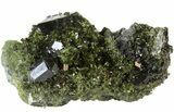 "Lustrous 2.4"" Epidote Crystal Cluster with Actinolite - Pakistan - #41584-1"