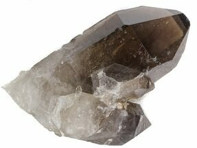 "2.1"" Smoky Quartz Crystal Cluster - Brazil For Sale, #41999"