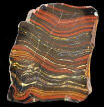 "Buy 4"" Polished Tiger Iron Stromatolite - (2.7 Billion Years) - #42622"