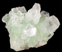 "Buy 2.8"" Zoned Apophyllite Crystal Cluster - India - #44338"