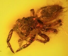Fossil Spider (Aranea) In Baltic Amber For Sale, #45131