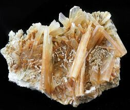 Gypsum var. Selenite - Fossils For Sale - #45192